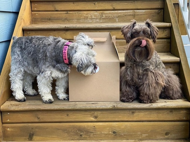 Two puppies discovering what it is inside Dogs Supporting Local kit