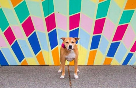 Vancouver dog selfies celebrate stunning Robson Street murals