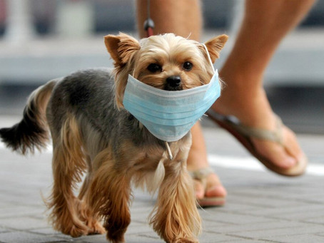 Good news: There's no evidence your dog can get coronavirus, WHO confirms