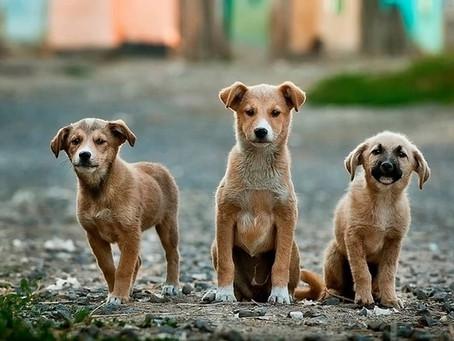 20 Most popular dog breeds in Vancouver revealed