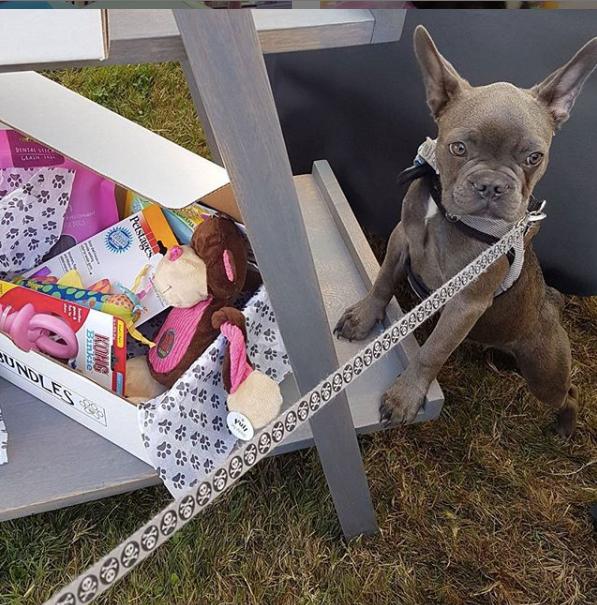 Dog Bundles Instagram photo