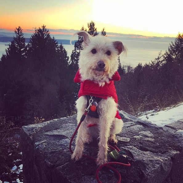 Kyla's rescue pup Sugar in his hometown of Vancouver