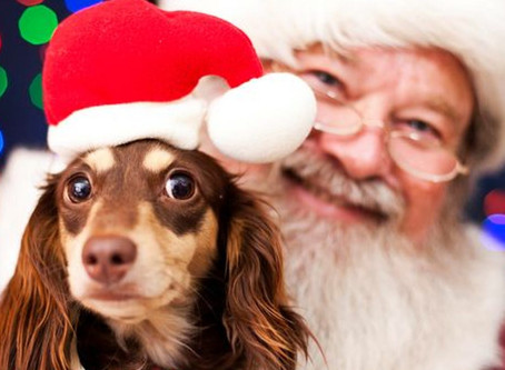 14 places to get a Santa Claus photo with your dog in Vancouver