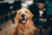 short-coated-tan-dog-2253275.jpg