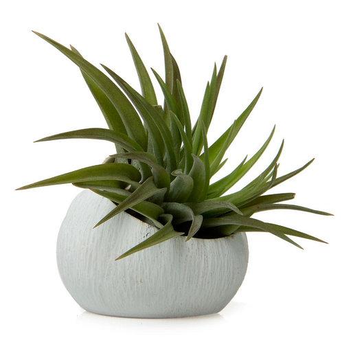 Mini Succulent Cup Favor