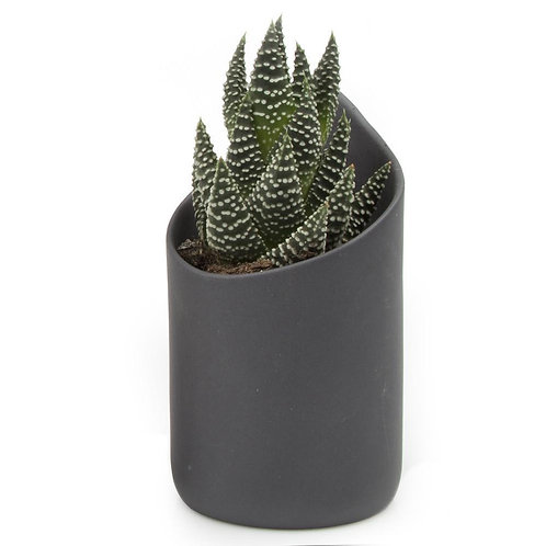 Succulent Pot Favor