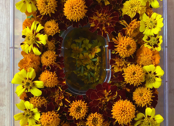 Marigold Forest Mix - Lg Container