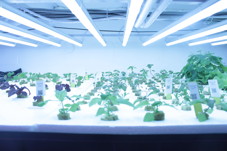What is Controlled Environment Agriculture?