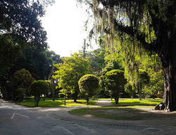 Jardin botanique de Rio de Janeiro