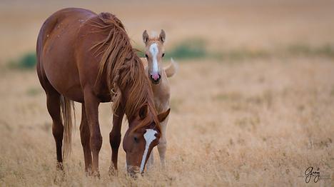 Mare foal_Greig Huggins.png