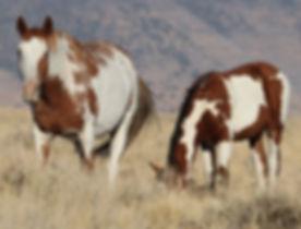 Wild horses_John Borowski_edited.jpg