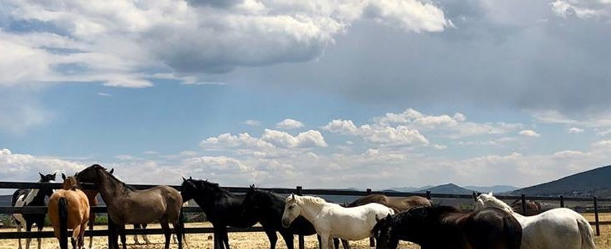 The Wild Heart Sanctuary herd of eight rescued wild Mustangs