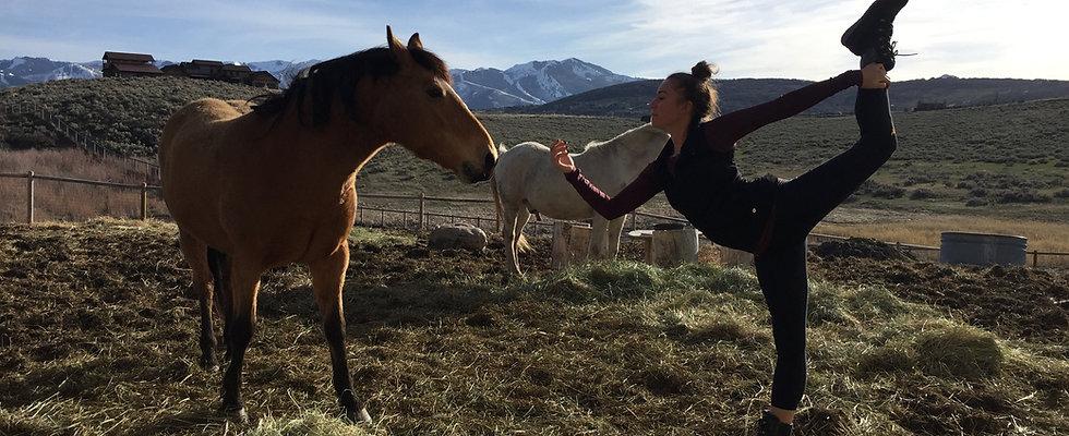 Horse yoga.JPG