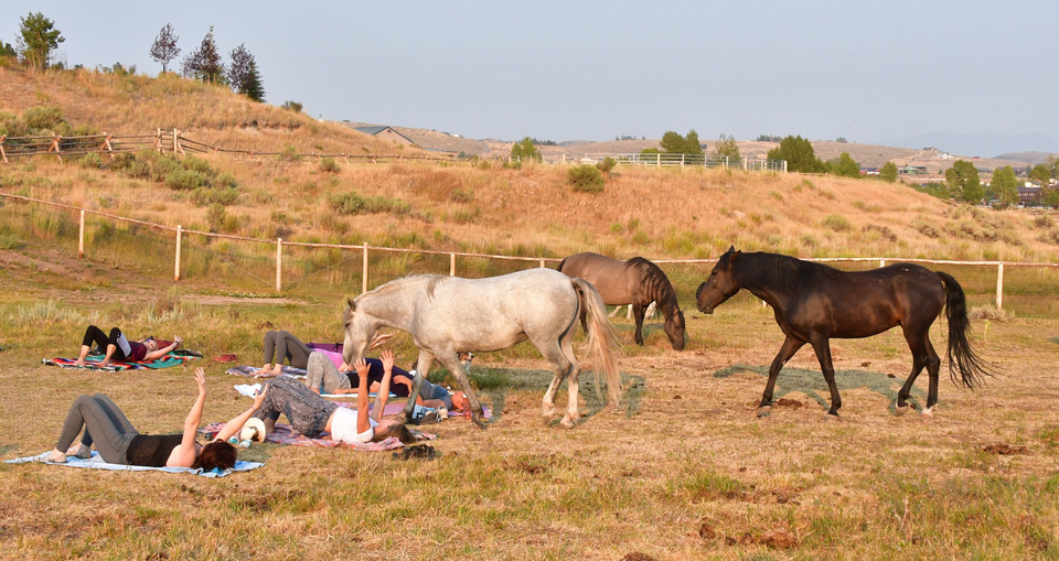 Brawson, Shakira and Wind Walker at Horse Journey yoga