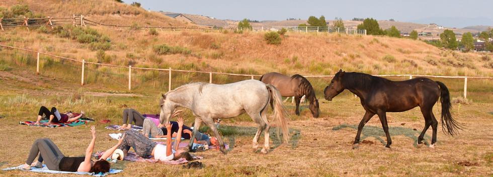 Brawson, Shakira and Wind Walker at Horse Journey yoga