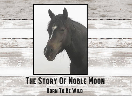 Story of Noble Moon (Book)