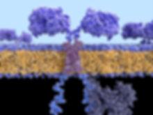 F0203085-Chimeric_antigen_receptor,_illu