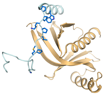 DCP1-XRN1 interaction