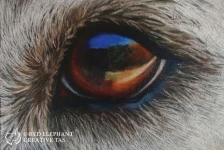 Canine Eye