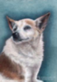 Dog Portraits4.jpg