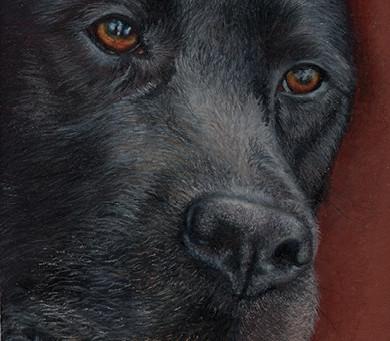 Pet memorial portraits