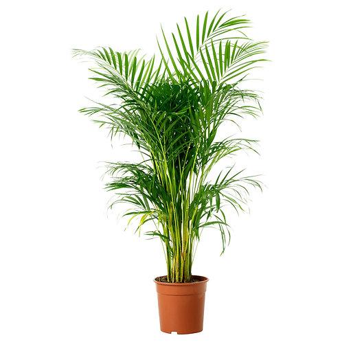 Grøn plante / green plant