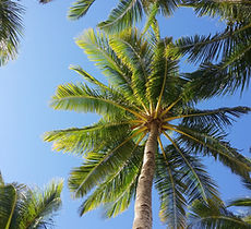 palm-tree-2065658_1920.jpg
