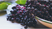 Combat cold and flu season with Elderberry!