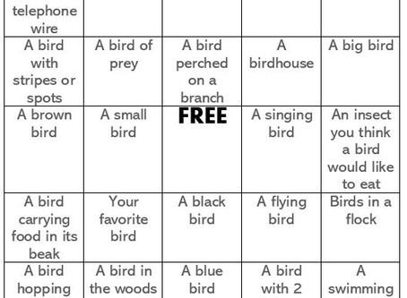Backyard Birds Activities