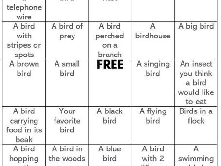 Activities: Backyard Birds