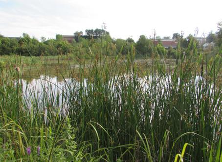 Week 3: Wetlands!