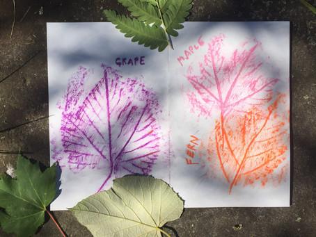 Activities: Nature Journaling