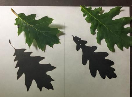 Tree Identification Activities
