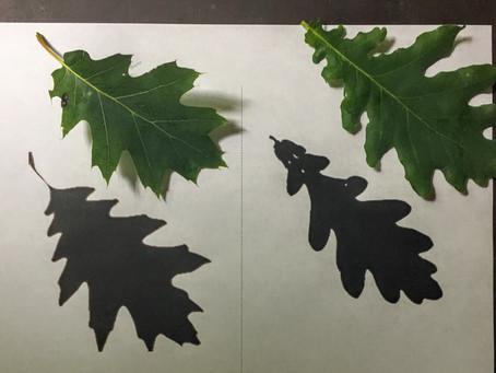 Activities: Local Tree Identification