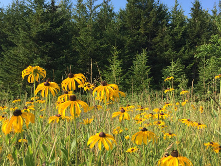 Activities: Ferns and Wildflowers