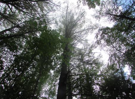 Week 2: Local Tree Identification