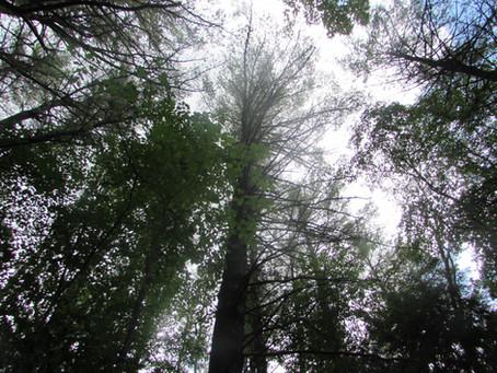 Program: Local Tree Identification