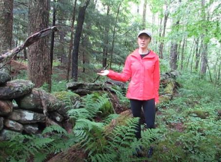 Week 6: Forest Detectives