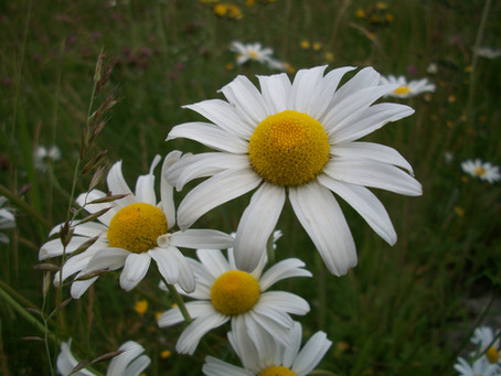 Program: Ferns and Wildflowers