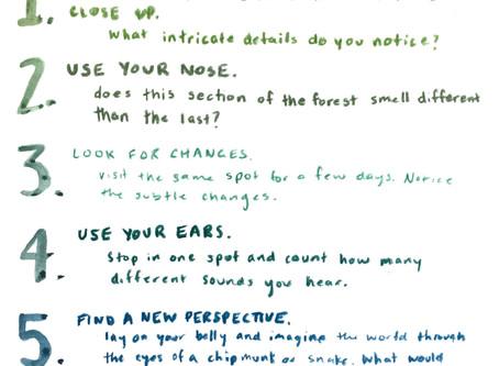 Week 5: Nature Journaling
