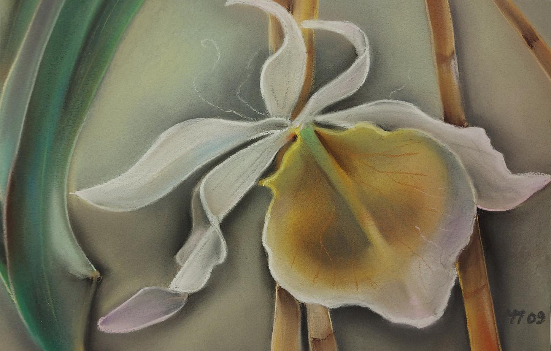"""""""Wieße Orchidee"""""""