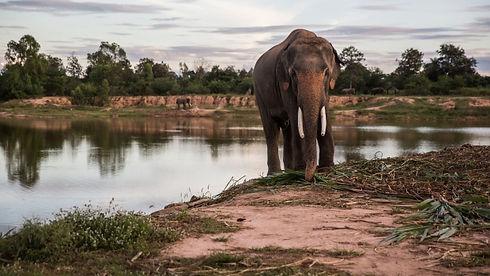 elephant-poachers-sometimes-use-firearms
