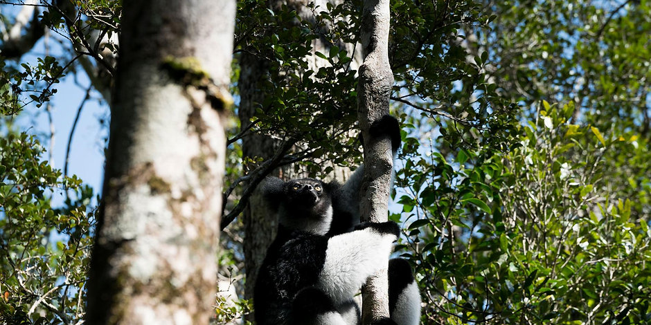 gemstones-lemurs-madagascar-i8776-180802