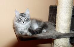 Alf 3 месяца