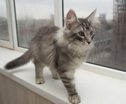 Alf 3.5 месяца