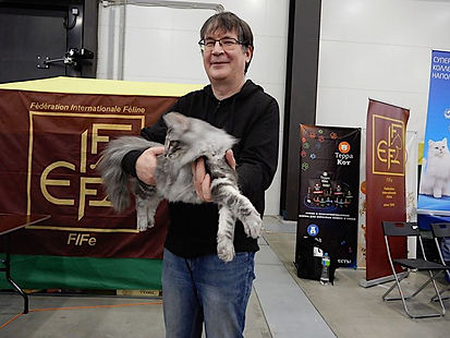 Норвежская лесная кошка Carol Viking Heritage*RU