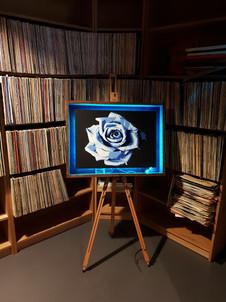 Rose (Framed)