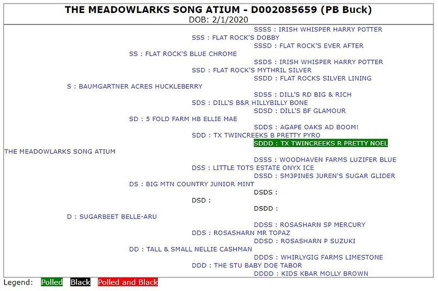 The Meadowlarks Song Atium