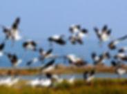 Birding china tour