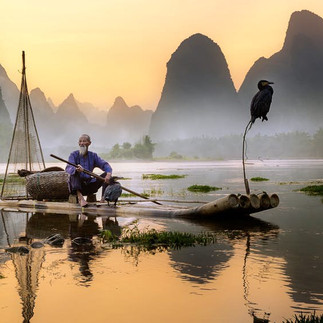 The cormorant fisherman in Guilin and Xinping have been using cormorants to catch fish on the Li River for generations.